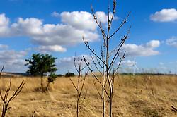 Pale Eoliche nella campagna nei dintorni di Minervino Murge immerse nella vegetazione locale.