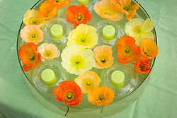 Shallow glass bowl of floating poppies