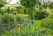 Delphinium and Allium 'Purple Sensation' at Stockton Bury Gardens, Kimbolton, Leominster, Herefordshire, UK