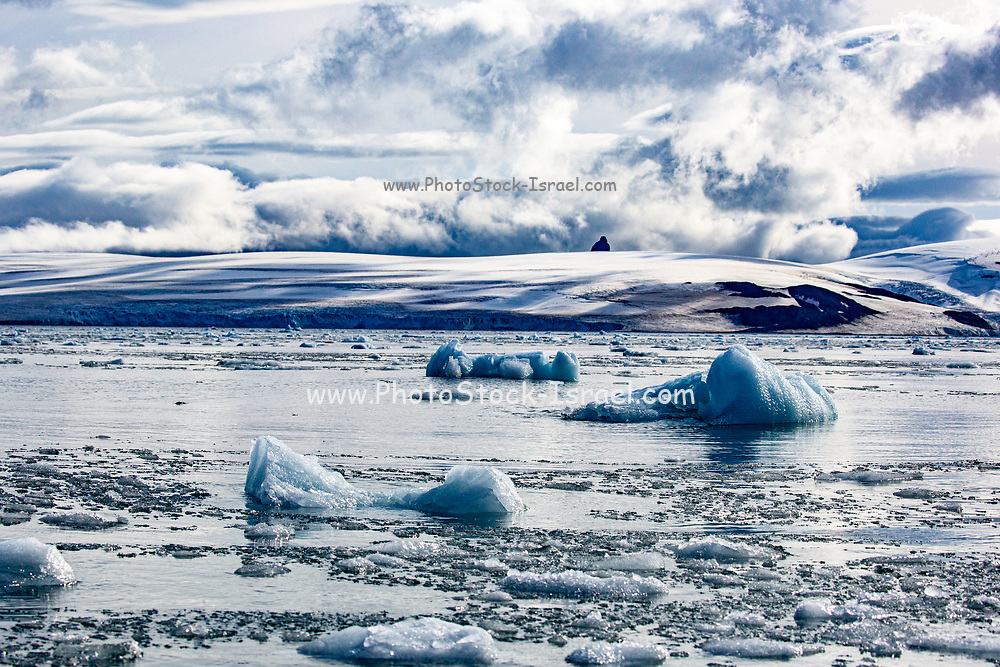 melting Iceberg due to global warming in the Southern Atlantic Ocean, Antarctica