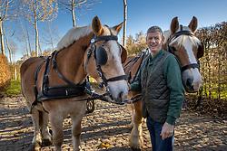 Optuigen, Jambon Bert, BEL<br /> Stoeterij Diepensteyn - Steenhuffel  2020<br /> © Hippo Foto - Dirk Caremans<br /> 18/11/2020