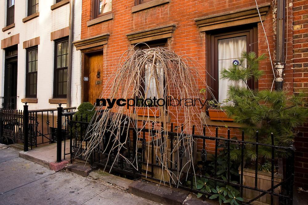 Entrance at 36 Leroy Street