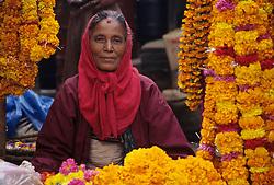 Asia, Nepal, Kathmandu, Asan Tole Square. Hindu woman sells strands of marigolds, used to decorate homes for Tihar Dipawali Festival.