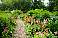 A gravel path through borders ofPrimula Candelabra, a rainbow of colours in the bog garden at Forde Abbey, Chard, Dorset, UK
