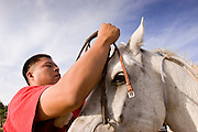 """09 SEPTEMBER 2007 -- ST. MICHAELS, AZ: DONAVAN FABER, from Navajo, AZ, puts a bridle on his horse before the horse was ridden in a traditional Navajo Horse Race in the summit area of the Navajo Indian reservation about 10 miles west of St. Michaels, AZ. Traditional horse racing is making a comeback on the Navajo reservation. The races are run on improvised courses that vary depending on the local terrain. Use of saddles is optional (except in the """"Cowhand Race"""" which requires a western style saddle) and many jockeys ride bareback. The distances vary from one mile to as long as thirty miles. Traditional horse races were common until the 1950's when they fell out of favor, but there has been a resurgence in traditional racing since the late 1990's and now there is a traditional horse racing circuit on the reservation. The race was organized by the Begay family of Steamboat, AZ and run on private land about three miles from a paved road.  Photo by Jack Kurtz"""