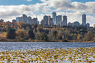 Various office and apartment towers (some under construction) in the Metrotown area of Burnaby, British Columbia, Canada.  Photographed from Deer Lake in Deer Lake Park on a fall day.
