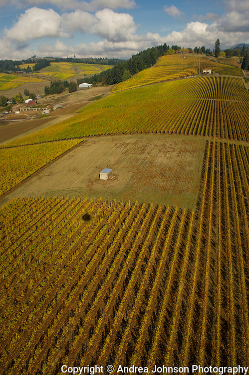 Saffron Fields Vineyard aerials fall 2012, Yamhill, Willamette Valley, Oregon