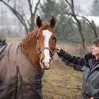 Jennifer Leuty Farm - Thoroughbred Breeding