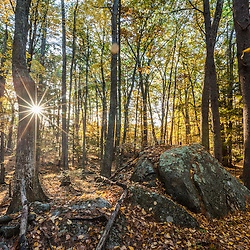 Fall in the forest along the Sweet Trail in Durham, New Hampshire.