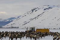 Elk count on National Elk Refuge
