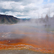 Upper Terrace - Mammoth Terrace Hot Springs - Yellowstone National Park
