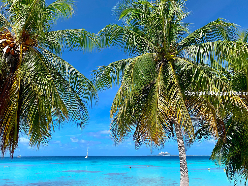 Cococnut, Palm, Tree,, Fakarava, Tuamotu Islands, French Polynesia, South Pacific