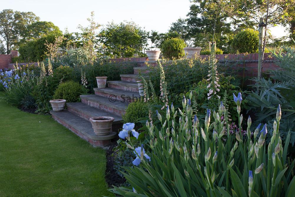 Iris germanica 'Jane Phillips' and Digitalis purpurea 'Sutton's Apricot', Manor Farm, Cheshire