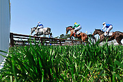 27 March 2010 : The field chases the leader in the third race, a timber race at the Carolina Cup.
