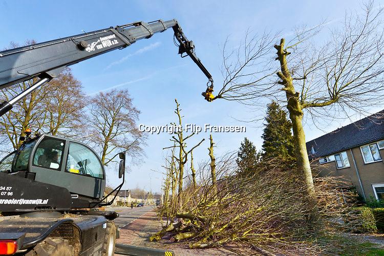 Nederland, Nijmegen, 10-3-2016De platanen in de wijk Lankforst, onderdeel van de Dukenburg,  worden gesnoeid, en de rij bomen die het dichst tegen de huizen staan gerooid. De wortels kwamen in het riool en de takken te dicht bij de huizen.FOTO: FLIP FRANSSEN