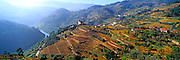 PORTUGAL, DOURO, AGRICULTURE vineyards on Douro River at Barqueiros