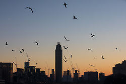 © Licensed to London News Pictures. 29/12/2016. London, UK. Birds are seen silhouetted as the sun sets behind construction cranes in central London after several days of freezing temperatures and intense fog in the capital. Photo credit: Rob Pinney/LNP