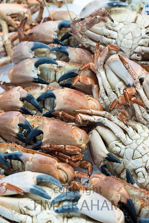 Fresh crabs, decapod crustaceans, showing crab claws on sale at St Helier Fish Market in Jersey, Channel Isles