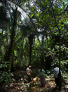 Collecting and eating Palm fruits. Going foraging with Roxana Nate and her siblings, in the jungle.
