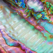 Macro view of iridescent abalone shell colors and textures highlighted with lightpainting.  Image placed as semifinalist in North American Nature Photography Association (NANPA) 2016 Showcase competition, Altered Reality category.
