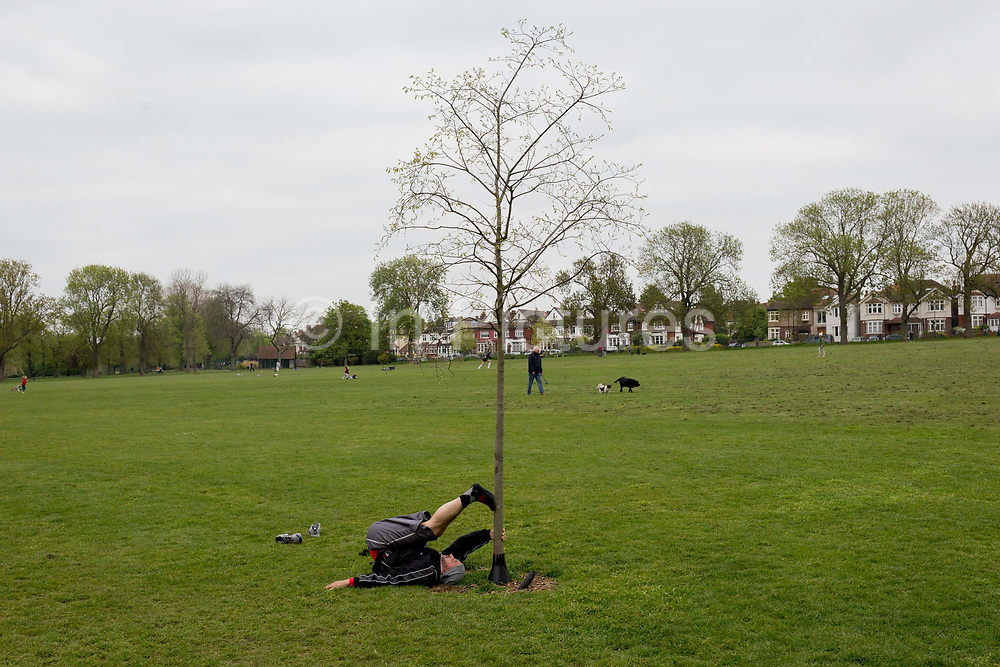 At the beginning of the fourth week of the UK governments lockdown during the Coronavirus pandemic, and with 120,067 UK reported cases with 16,060 deaths, a man stretches his leg against a young tree in Ruskin Park, a green space in Lambeth, South London, on 20th April 2020, in London, England.
