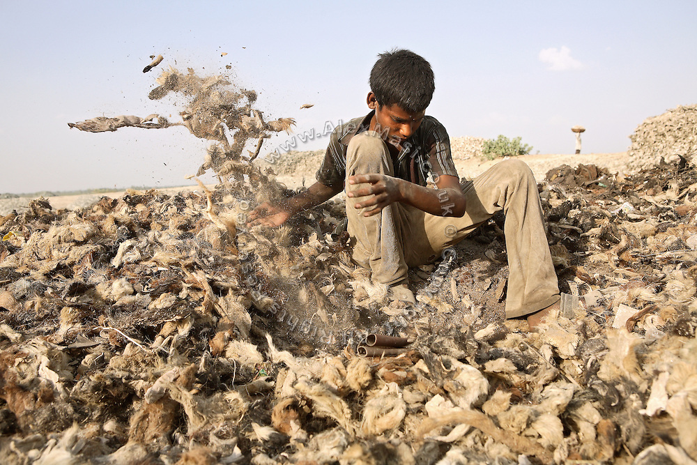 A young boy is using his bare hands to collect leather scraps a few meters away from the banks of the Holy Ganges River, in one of the illegal dumping and burning grounds surrounding the area of Jajmau, Kanpur, Uttar Pradesh. The scrap leather is destined to be boiled and reduced to a thin dust: the raw material for fertilisers and chicken food production.