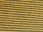 .Monarch Butterfly scales (Danaus plexippus)  Colored Scanning Electron Micrograph (SEM) of scales from the wing.  Magnification is 800 x and represents a field of view of .01 mm.