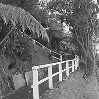 When was this photo taken?<br /> <br /> Not exactly sure - perhaps early 2000's<br /> <br /> Where was this photo taken?<br /> <br /> Wellington NZ - Otari Nature Reserve<br /> <br /> Who took this photo?<br /> <br /> Peter Batra<br /> <br /> What are we looking at here?<br /> <br /> This is a path in the natural area that features NZ native plants<br /> <br /> How does this old photo make you feel?<br /> <br /> Nostalgic--it's a great place to walk and explore--with small rivers flowing through. Lots of hills to get the heart rate up.<br /> <br /> Is this what you expected to see?<br /> <br /> I didn't have any idea of what was on these 'lost rolls'<br /> <br /> What kind of memories does this photo bring back?<br /> <br /> Good memories! Spending time in nature and exercising.<br /> <br /> How do you think others will respond to this photo?<br /> <br /> Perhaps it will evoke similar memories in others, and even more so with those familiar with the place where this was taken