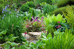 Iris, ferns at primulas in the Upper Stream Garden at Hidcote Manor