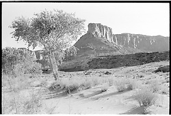 On Rt 95 in Utah, right next to where we camped, along side the road, the night before. Not far from the Colorado River Bridge. Nikon Ftn Camera: Tri-X film @ 400 ASA, 500th f/8 35mm f/2 Nikkor lens. Metered with the camera's center weighted Tn Finder meter.