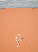 Dead tree branch in sand dune, Flinders Range, South Australia
