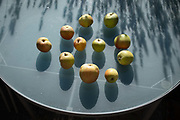 By the shadows of nearby lavender, home-grown apples ripen In sunshine on a garden table, on 30th July 2020, in London, England.
