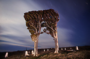 """Totara Graveyard.<br /> 2001.<br /> 320x490mm.<br /> C Type Print.<br /> Edition of Five. <br /> First shown in the exhibition """"Nightscapes"""" in the Dobson Bashford Gallery, Christchurch (2001).<br /> Winner of """"Pictures from the surface of Aotearoa"""" (2004), selected by Gregory O'Brien (Curator of City Gallery Wellington) and Paula Savage (Director of City Gallery Wellington). <br /> """"Like the best landscape photographs, the image seemed to also be saying something about humanity and the relationship between people and the land. It is a sombre, eloquent image....  which also manages to convey a sense of time passing, a creeping melancholy and a sense of history."""""""