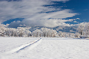 Field of snow and trees and mountains in background al covered in snow with blue sky.