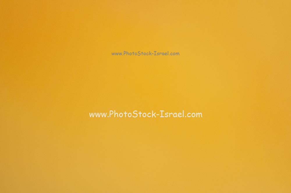 De focused orange pulp of a mango as a natural background