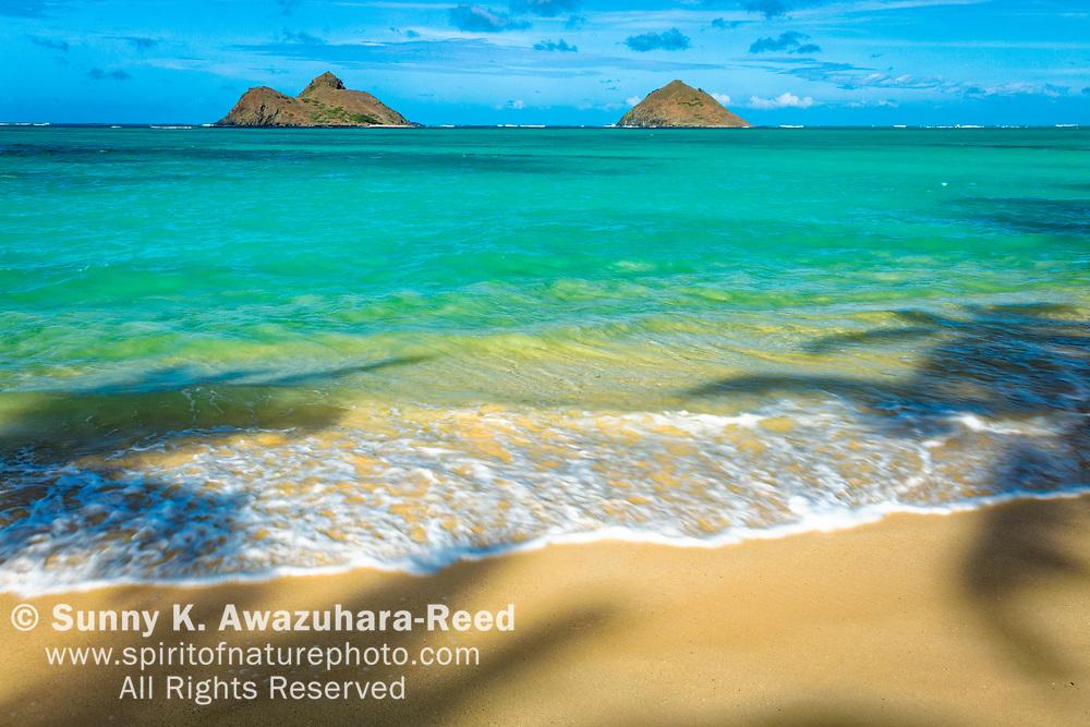Palm tree shadows on Lanikai Beach with Mokulua Islands under blue sky. Kailua, Oahu Island, Hawaii.