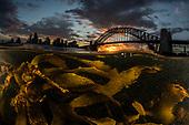 Sydney Submerged