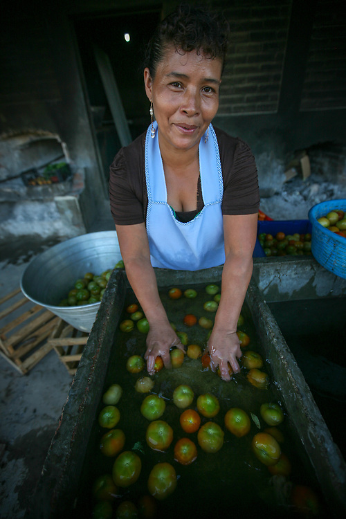 Carmen Elena Hernández viuda de Ramos washes tomatoes at the Los Pinos coop. As well as producing coffee the coop has diversified and produces vegetables for the local market as well as for members themselves. Cooperativa Los Pinos is a certified Fairtrade producer based in El Salvador.