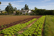 Lettuce crops. The Center for Urban Agriculture at Fairview Gardens is one of the oldest organic farms in California. Located on 12 acres, the 100-year-old farm provides the community with organic fruits and vegetables and through educational programs and public outreach demonstrate the economic viability of sustainable agricultural methods. Goleta, California
