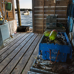 Herring stored in the bait room at the Friendship Lobster Co-op in Friendship, Maine.