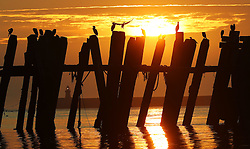 Cormorants on a pier at North Shields Fish Quay as the sun rises at the start of what could be the hottest September day in more than 50 years.