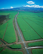 Sugar Cane, Maui, Hawaii, USA<br />