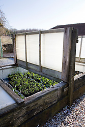 Coldframe made from railway sleepers and polystyrene insulating boards