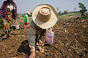 """25 FEBRUARY 2008 -- MAE SOT, TAK, THAILAND: Burmese migrant farm workers plant corn on a farm owned by a Thai farmer near Mae Sot, Thailand. One of the workers said all of the farm workers in the area were Burmese because Thais wouldn't do the work. There are millions of Burmese migrant workers and refugees living in Thailand. Many live in refugee camps along the Thai-Burma (Myanmar) border, but most live in Thailand as illegal immigrants. They don't have papers and can not live, work or travel in Thailand but they do so """"under the radar"""" by either avoiding Thai officials or paying bribes to stay in the country. Most have fled political persecution in Burma but many are simply in search of a better life and greater economic opportunity.  Photo by Jack Kurtz"""