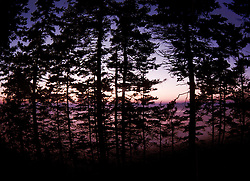 Witherle Woods, Castine, Maine, US
