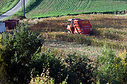 corn cub harvesting machine at work in the cornfield France