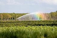 25-04-2020: Blesdijke, Weststellingwerf - Land besproeien met regenboog en fietser