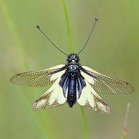 Insekten und Insektenlebensraum