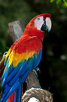 Very colorful parrot perched in a tree branch.