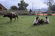Farmers wait by their champion bull. Bullfighting is part of Minang Kabau culture and contests take place every Tuesday and Saturday evening in towns and villages across central Sumatra. Indonesia, May 2000